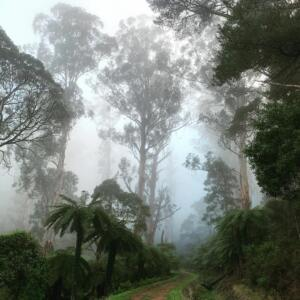 Warburton and the stunning Yarra Valley , Victoria, Australia.